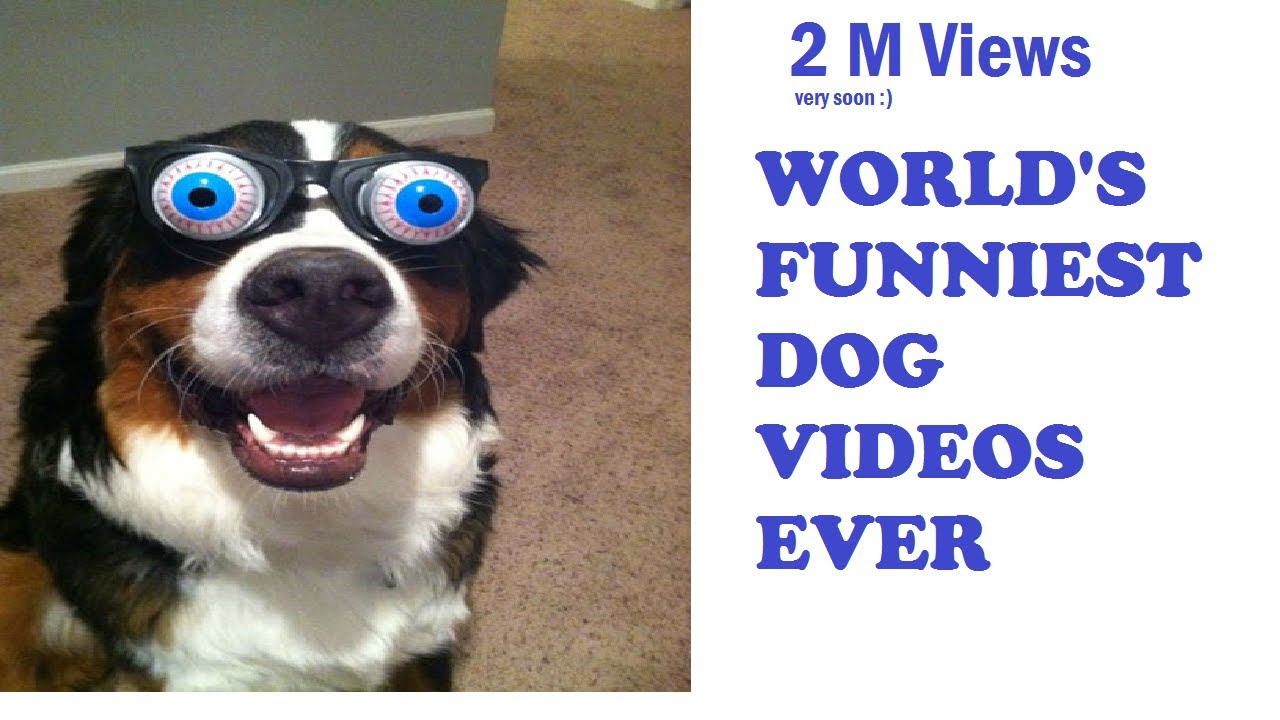 Image of: Montage 85m Worlds Most Funniest Dog Videos Compilation 2m Youtube Views Very Soon Funny Worlds Most Funniest Dog Videos Compilation 2m Youtube Views Very