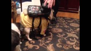 Pug Style Ghostbuster Halloween Costume