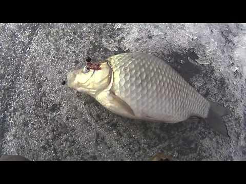 Видео рыбалка в челябинске)