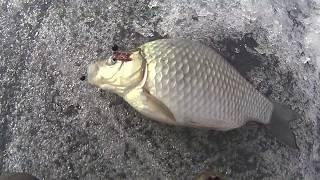 Рыбалка в челябинской области  Карась по последнему льду