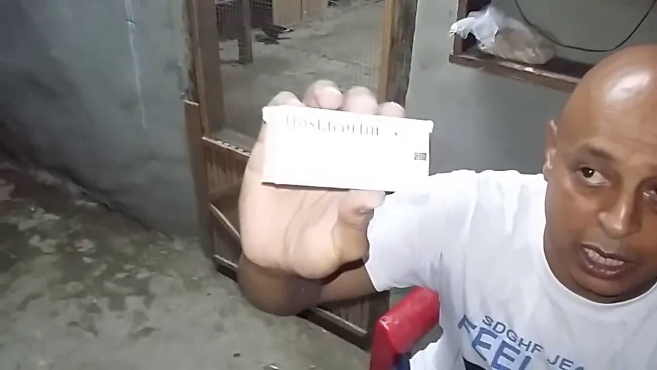 الروشه التعامل مع الحمام المصاب بالروشه حاجه كده علي السريع Youtube