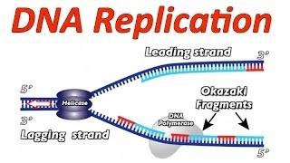 DNA Transcription