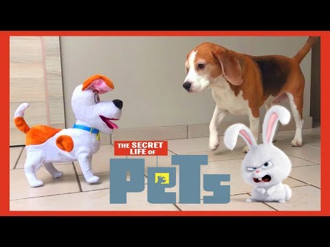 Dogs Pranked by Max from The Secret Life Of Pets : Louie The Beagle