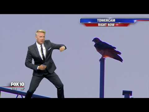 Bird interrupts Cory's forecast