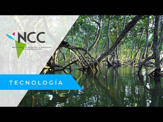 Los escasos manglares de Miami son protegidos por sus habitantes