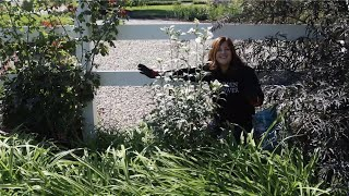 Planting a Rose of Sharon that Gets SUPER Tall! 🌿 // Garden Answer