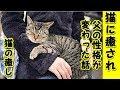 【猫 癒し】厳格な父が脳梗塞になり猫に癒され性格が変わった話(猫 感動 泣ける話 保護 涙腺崩壊 感涙 動物 �