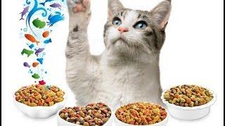 Что нельзя давать котёнку!? Особое питание???