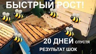 Ускоренное развитие весной / результат!!!!/Пасека 2018/ пчелы