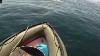 Les dauphins de l