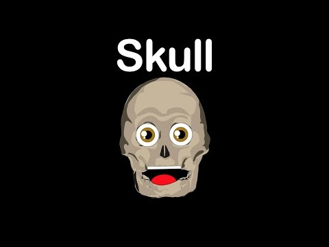 The Human Body Systems for Kids/Skull Bones/Skull Anantomy
