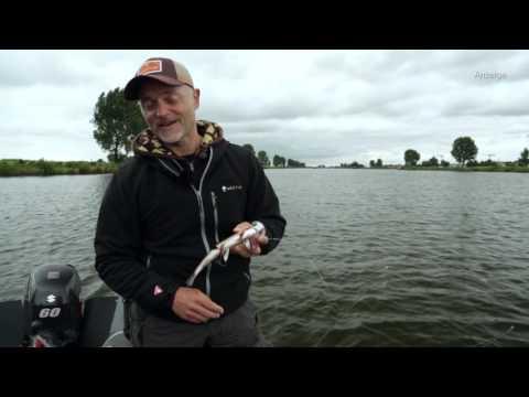 Westin - Hybrids in action by Dietmar Isaiasch (German speaking)