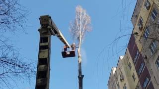 Пильшики пилят дерево на подвязах !!!...