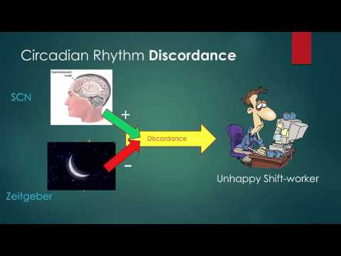 Circadian Rhythms and Shift Work