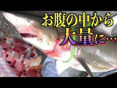 サメ解体の全て