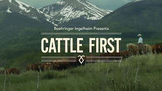 Cattle First Documentary