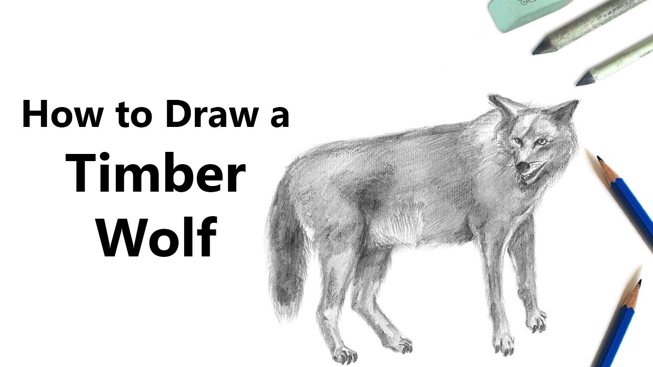 How To Draw A Timber Wolf With Pencils [time Lapse]