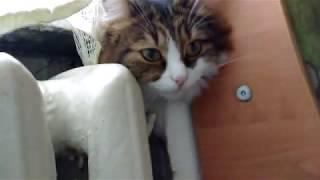 Почему кошки любят тепло?😼