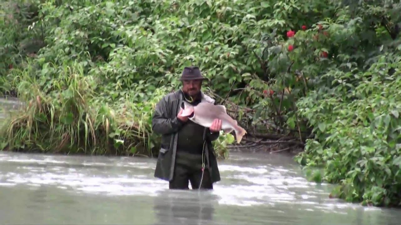 Fishing the chilkoot river bears and people youtube for Alaska out of state fishing license