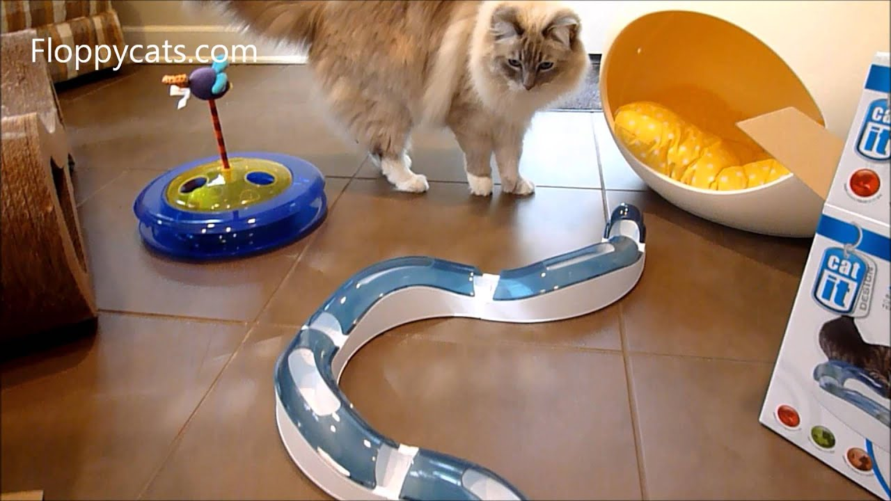 Ragdoll Cats Receive Catit Senses Interactive Cat Toys
