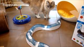 Ragdoll Cats Receive Catit Senses Interactive Cat Toys - ラグドール - Floppycats
