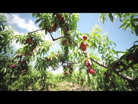 Ravifruit Teasing