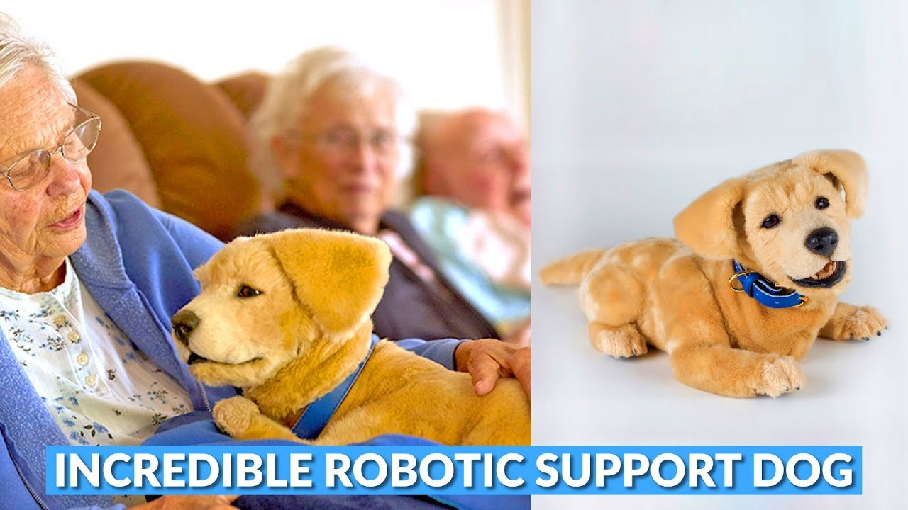 Robotic Emotional Support Dog Helps People With Dementia