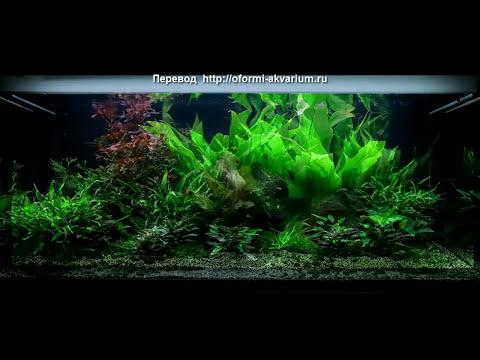 Красивый, простой в содержании аквариум 35л для ребенка