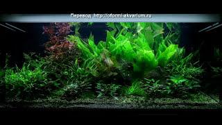 Оформление аквариума на 300 литров от Dan Crawford(300 литровый аквариум, оформление которого описано в данном примере, хорошо выглядит уже с момента его запус..., 2013-06-24T17:39:36.000Z)