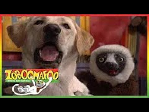 Zoboomafoo With The Kratt Brother 192 Bathtime Animals Hài Nổi