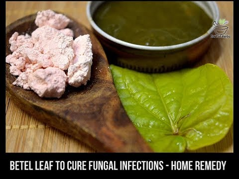 Betel Paste To Cure Nail Infections Paronychia Natural Remedy