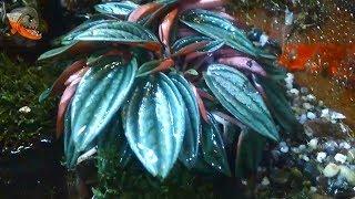 Оформление террариума живыми растениями. Мой первый опыт