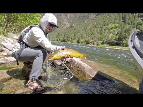 Dry Fly Fishing On Utah's Green River 2019