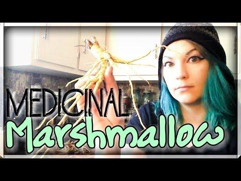 Marshmallow Root -