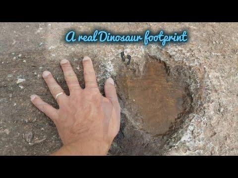 Looking For Real Dinosaur Footprints 👣 @The Bendricks Beach!😎
