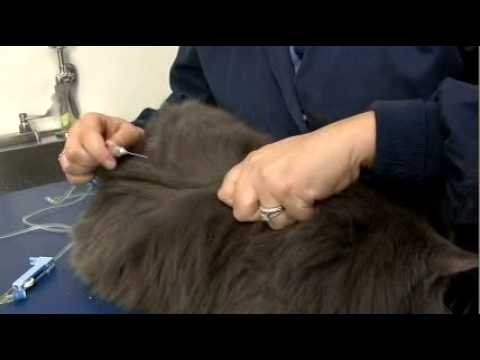 how to give a cat medicine