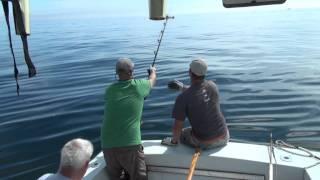 Блакитного тунця Рибалка від Глостер Ма 9/28/11 тунець 76 дюймів гігантський і дві риби за два дні.
