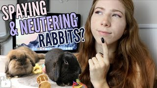 Does your rabbit need to be SPAY/NEUTERED? 🐰