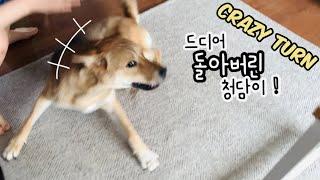 [Eng] 드디어 돌아버린~! 진돗개 청담이 Crazy…