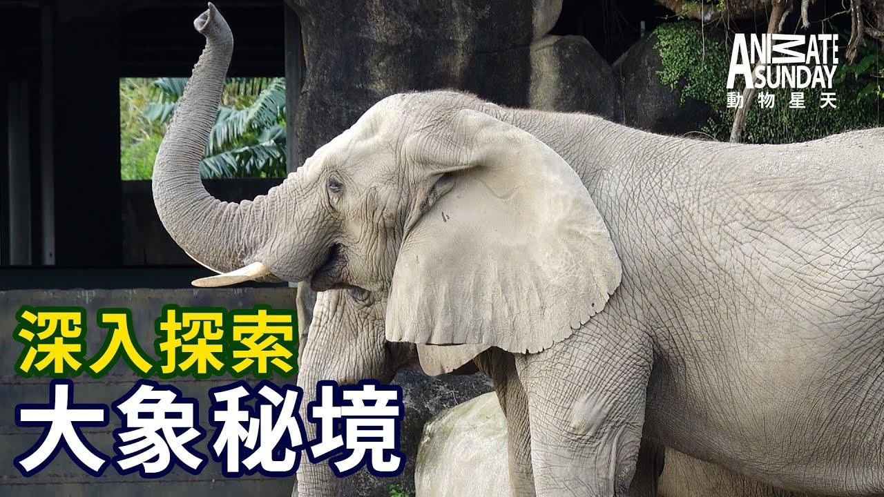 動物星天頻道《深入探索:大象秘境》搶先看 [4K]
