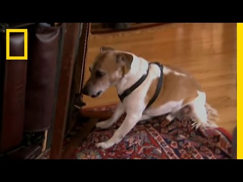 Scared Willie | Dog Whisperer
