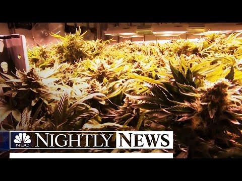 Study: Fatal Accidents Involving Drivers High On Marijuana Soars | NBC Nightly News