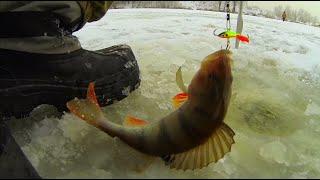 видео Рыбалка зимой на окуня