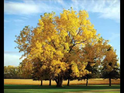 NHT - Jesen stiže dunjo moja