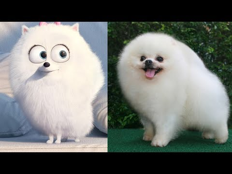 The Secret Life of Pets ALL CHARACTERS IN REAL LIFE