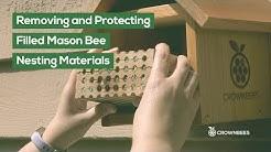 Mason Bees: Remove and Protect