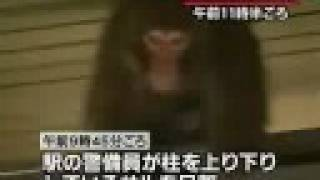 Monkey on the loose in Tokyo