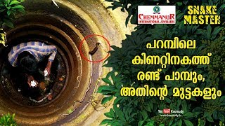 Two snakes and their eggs found in the well | Vava Suresh | Snakemaster EP 453