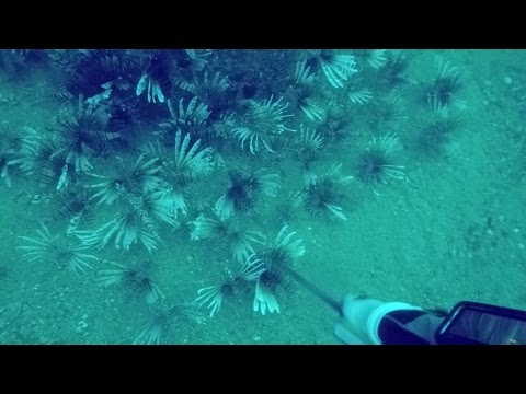 Pensacola Lionfish Hunting...Again