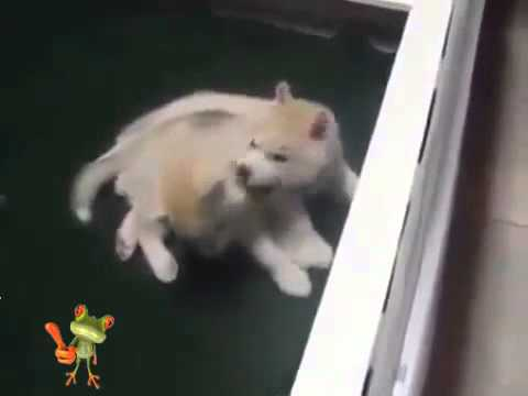 Funny Videos Funny Dogs Funny Cats Funny Fails Funny Pranks New Best Funny Video 2015